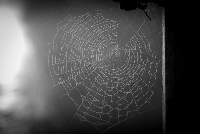 Ein Spinnennetz an einem Fenster